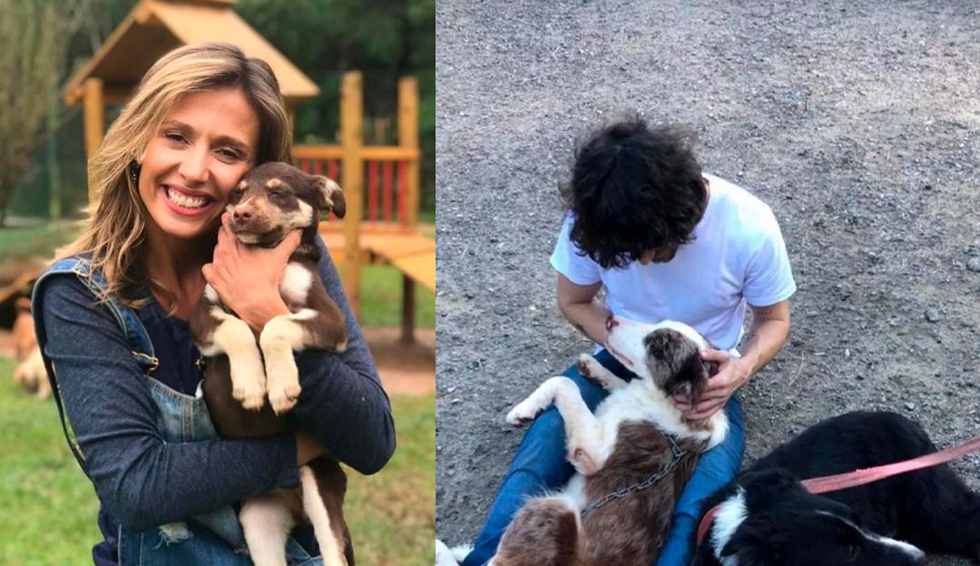 Fiuk para Luisa Mell após deixar seus cachorros em abrigo: 'Estão muito bem cuidados'