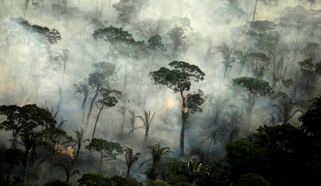 PrevisIA: Microsoft lança tecnologia capaz de prever incêndios e desmatamento na Amazônia