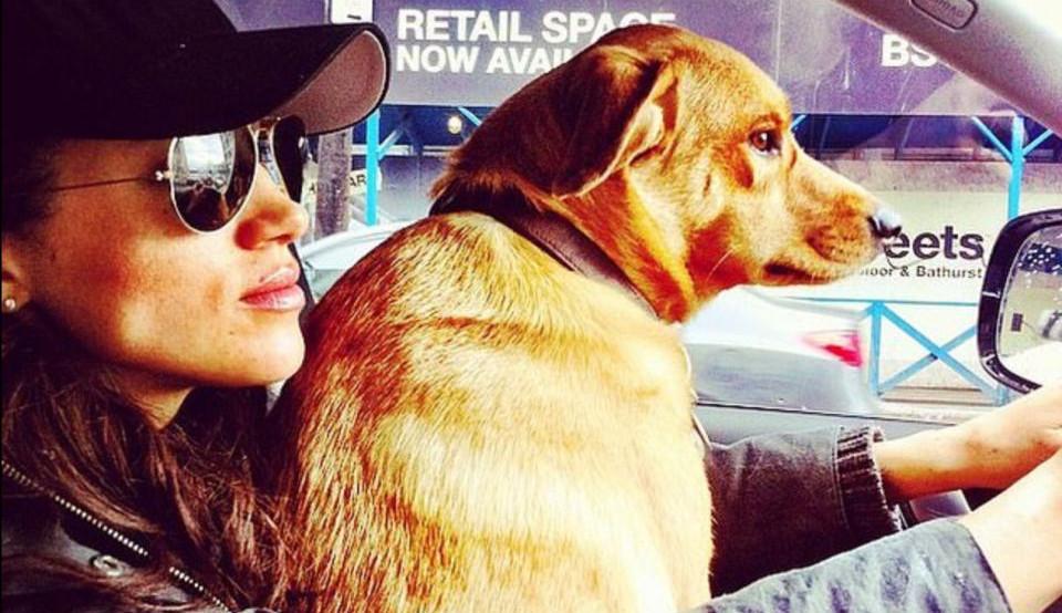 Príncipe Harry é motivo de Meghan Markle deixar seu cão para trás