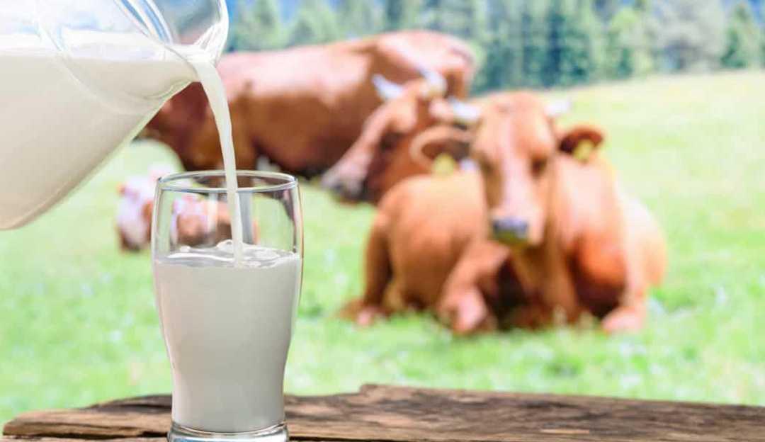 Diferenças entre leite materno e o leite de vaca