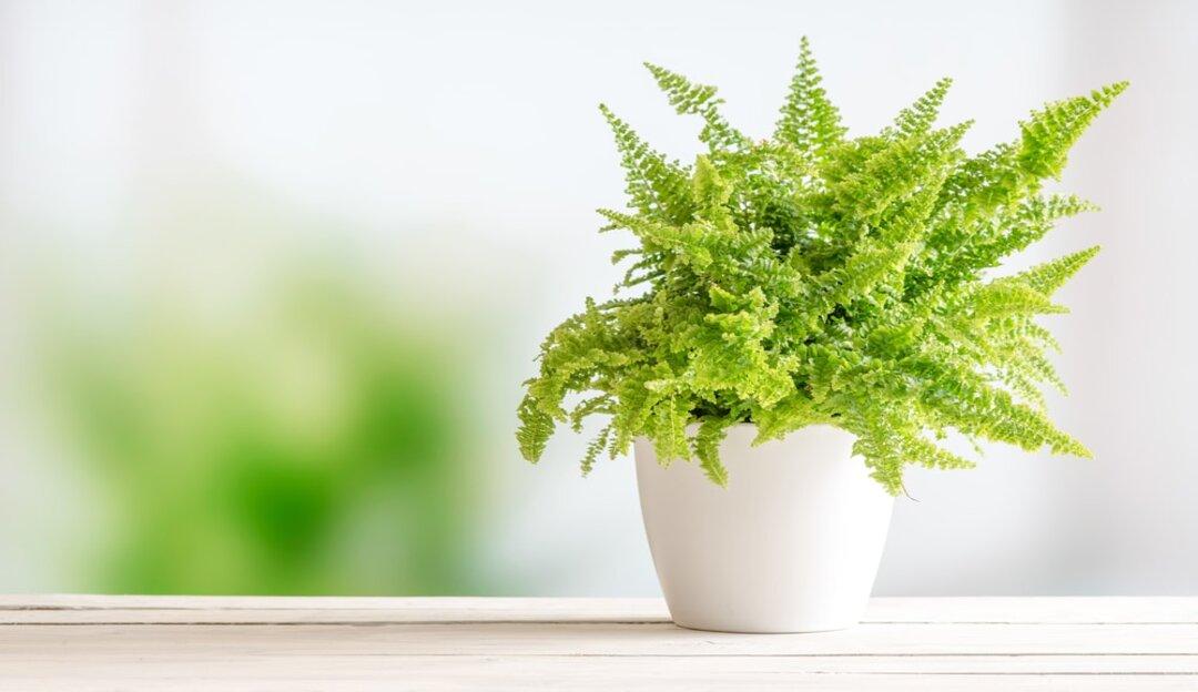 Plantas e seus efeitos purificadoras de ar